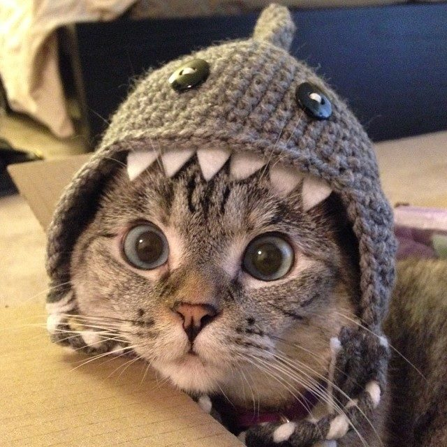A grey cat wears a crocheted hat that looks like a shark's mouth.