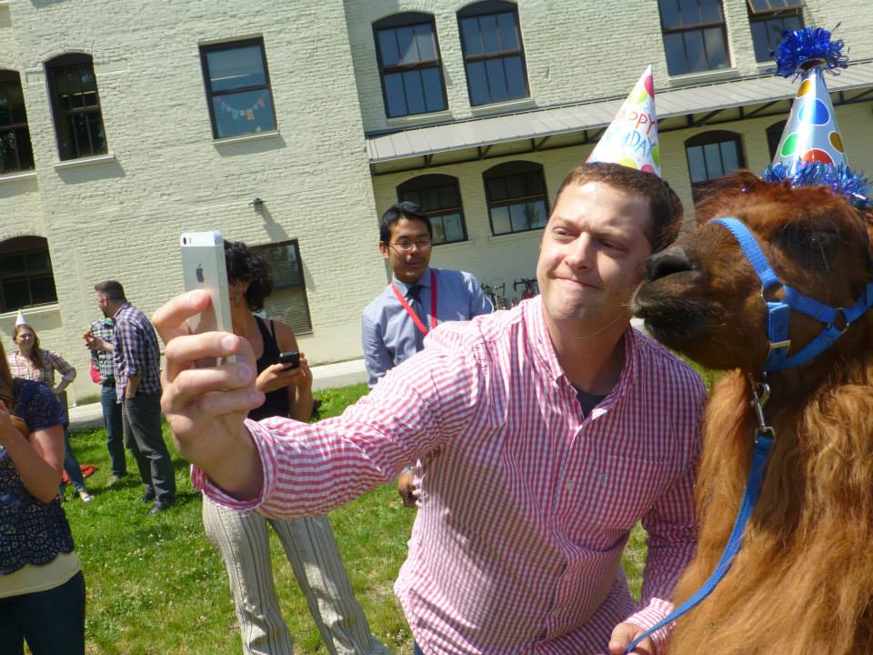 A white man in a pink button down shirt and paper party hat uses an iphone to take a selfie with a brown llama that's also wearing a party hat.
