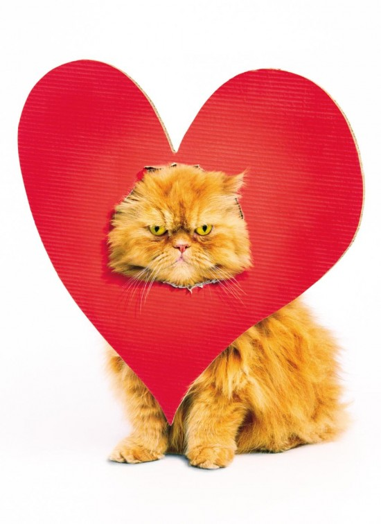 An orange cat wears a large read heart with a cutout for its face. The cat looks displeased.