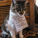 """A grey and white cat sits on a floor wearing a note that says """"I watched a mouse eat my food and did nothing."""""""